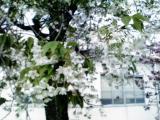 08-04-20_005_convert_20080428000753.jpg