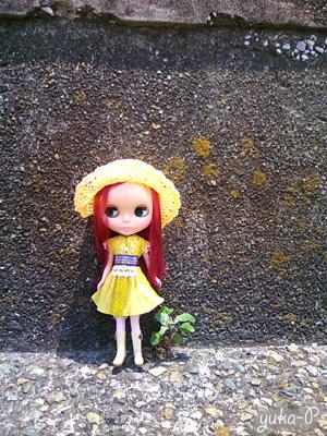 コンクリートに咲く草とカシス。