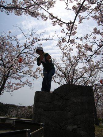 hanami005.jpg