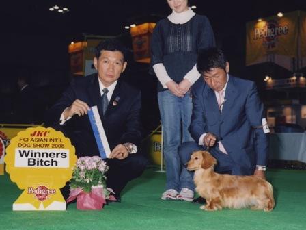 dogshow2008ajia
