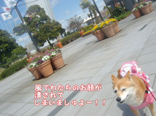 画像5 0111