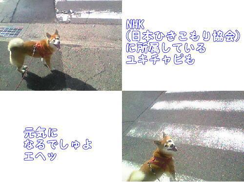 Image294011.jpg