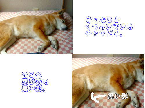 kocyo01001.jpg
