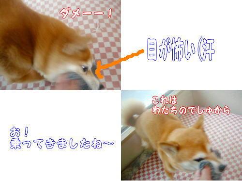 kutsushita0051.jpg