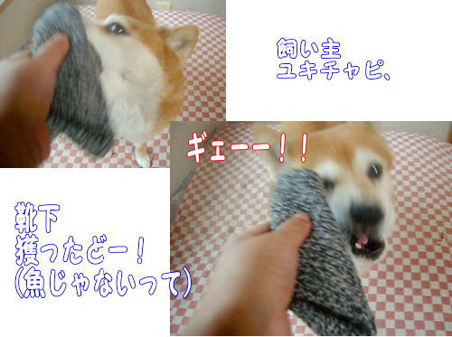 kutsushita0071.jpg