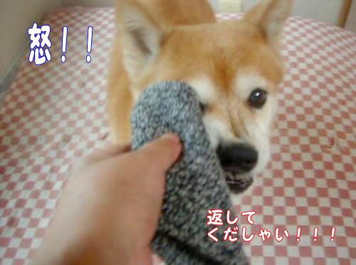 kutsushita0091.jpg