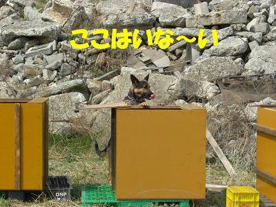 CIMG1056_sh01.jpg
