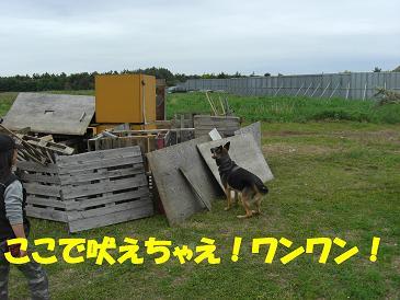 CIMG1699_sh01.jpg