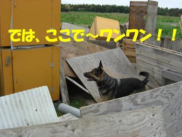 CIMG1704_sh01.jpg
