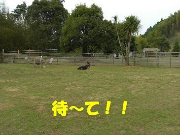 CIMG1708_sh01.jpg