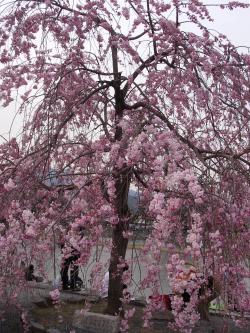 arashiyamakouen