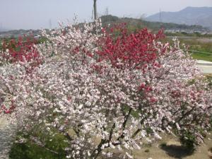 一本の木に たくさんの色が咲くよ