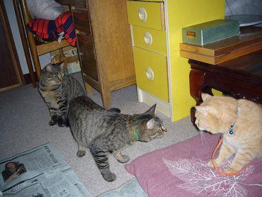 3cats-2.jpg