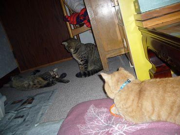 3cats-3.jpg