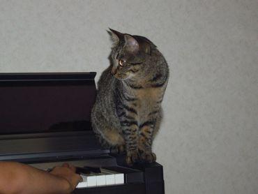 dayan-piano.jpg