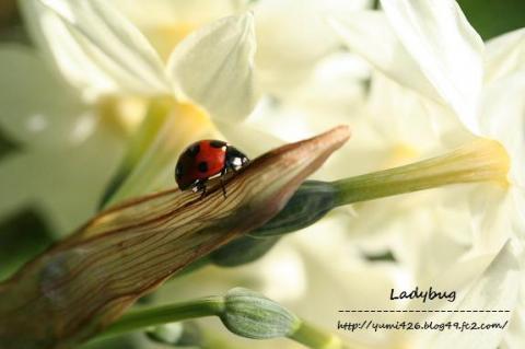 水仙の花の裏で・・・w