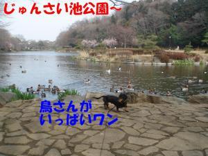DSC01714_convert_20080316132243.jpg