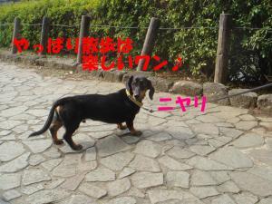 DSC01718_convert_20080316132416.jpg