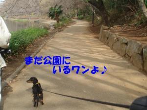 DSC01719_convert_20080316132500.jpg