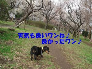 DSC01723_convert_20080316132617.jpg