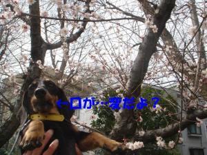 DSC01724_convert_20080316132705.jpg