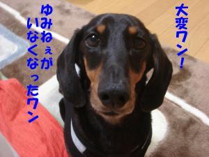 DSC01738_convert_20080323175645.jpg