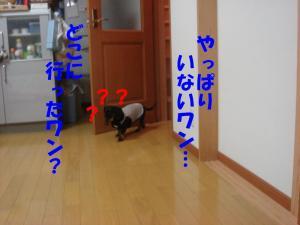 DSC01748_convert_20080323181033.jpg