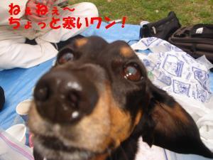 DSC02132_convert_20080401191536.jpg