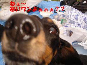 DSC02133_convert_20080401191730.jpg