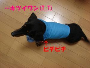 DSC02184_convert_20080402192635.jpg
