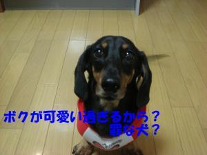 DSC02201_convert_20080411222455.jpg