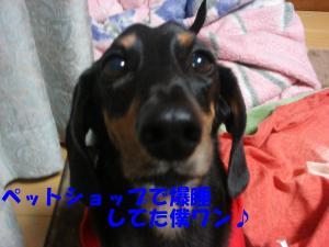 DSC02206_convert_20080407220817.jpg