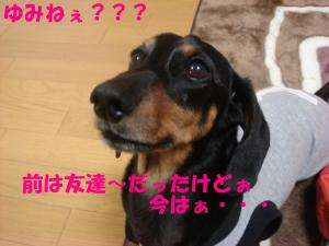 DSC02334_convert_20080410220855.jpg