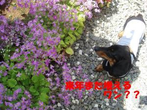 DSC02390_convert_20080413141928.jpg