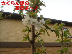 DSC02443_convert_20080416191603.jpg