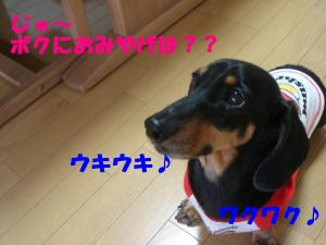 DSC02453_convert_20080416194026.jpg