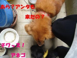 DSC02554_convert_20080420165837.jpg