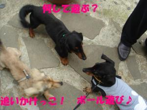 DSC02597_convert_20080421231515.jpg