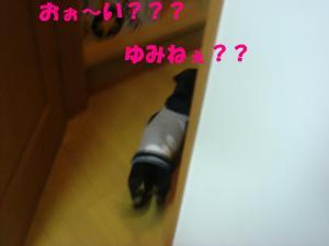 DSC02771_convert_20080425192647.jpg