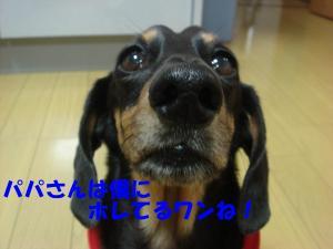 aaa_convert_20080407222652.jpg