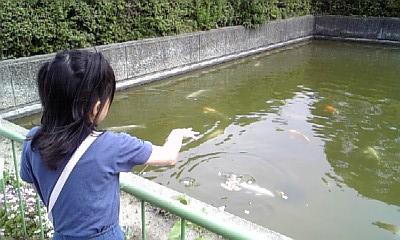 鯉のパンやり