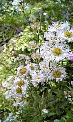 野の花NO.2