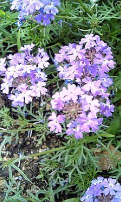 野の花NO.3