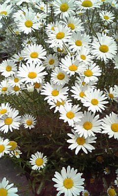 野の花NO.4