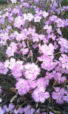 野の花NO.5