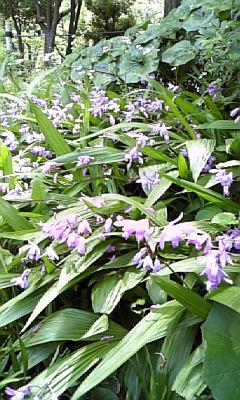 野の花NO.6
