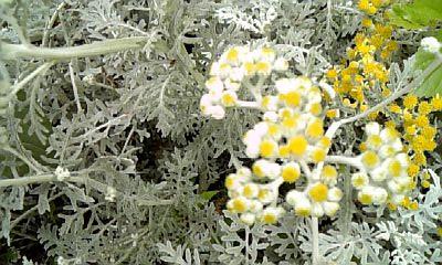 野の花NO.7