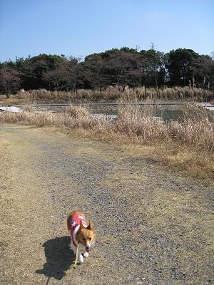 池のほとりを歩く3.27