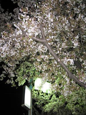 夜桜見物4.6
