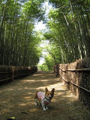 竹の散策路4.14